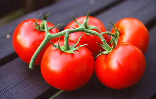 Şifa Evi - Bitkiler - domates bitki
